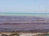 """بالصور.. تلوث ومياه مخضّبة بـ""""الأحمر"""" تغزو شاطئ العقير.. والسبب مجهول!"""