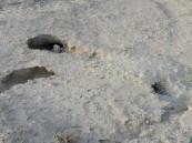 بالصور.. في #الأحساء مقبرة الشقيق في طي النسيان والكلاب الضالة تحفر قبور الموتى !