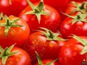"""لهذا السبب .. باحثون يحذرون من تخزين الطماطم في """"الثلاجة"""""""