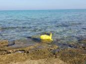 """بالصور.. الصدفة تقود أسرة للعثور على """"طلاسم سحرية"""" في شاطئ العقير بالأحساء!"""