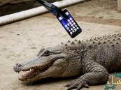 """بالفيديو… هل يصمد """"آيفون 7"""" بين فكي تمساح مفترس؟!"""