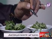 """بالفيديو.. خبير سعودي: الإكثار من استخدام نبات """"الحبق"""" يسبب السرطان!"""
