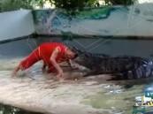 بالفيديو … تمساح غادر يلتهم رأس حارسه