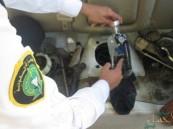 بالصور… إحباط 4 محاولات لتهريب أسلحة وخمور عبر جسر الملك فهد