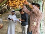 بالصور .. زراعة الاحساء تكثف جولاتها على المزارع للتأكد من الاستخدام الآمن للمبيدات
