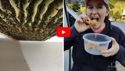 """بالفيديو.. أسراب النحل تهاجم منزل """"ليزا"""" والحصيلة 150 كيلو عسل !!"""