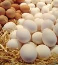 دراسة: تناول البيض على الإفطار ينقص الوزن