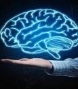 """اكتشاف """"لا يصدق"""".. زرع جهاز يقوي الذاكرة في أدمغتنا"""