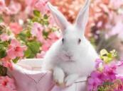 بولندا تثير الجدل وتدعو مواطنيها إلى التكاثر مثل الأرانب!