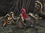 شاهد.. علاقة غريبة تجمع بين طفل هندي وقبيلة كاملة من القرود