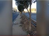 بين حملة للتشجير و حملة للإزالة.. مواطن ينتقد بمقطع مصور إهمال أشجار الطرق في الأحساء!!