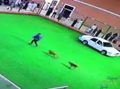 """بالفيديو.. كلب """"متهور"""" يفسد أحد عروض الجنادرية ويهاجم مدربا بالجمارك!"""