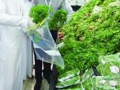 """الكشف عن كمية بقايا المبيدات في """"الغذاء السعودي"""" !!"""