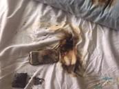 مات على سريره.. هاتف ذكي يقتل صاحبه أثناء نومه !!