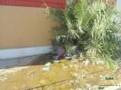 بالصور …. تسرب عداد مياه لأكثر من سنة ومصلحة المياه لا مجيب