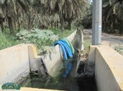تصريحات وزير الزراعة بقطع الماء والإعانة تثير قلق مزارعي الرز الحساوي .