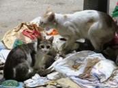 القطط تزاحم سكان الأحياء في شوارعهم ومخاوف من العدوى .