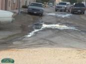 البعوض يزاحم سكان حي بوسحبل في منازلهم .