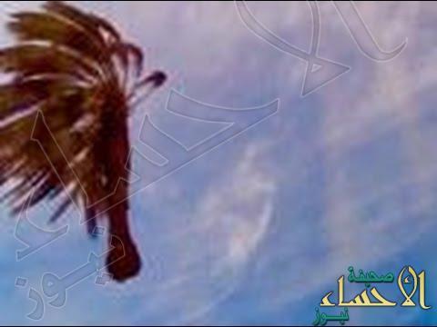 بالفيديو … نخلة طائرة تدهش سكان دبي