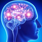 الأعصاب الدماغ المخ