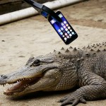 what-happens-if-an-alligator-bites-an-iphone-7-youtube-thumbnail-2