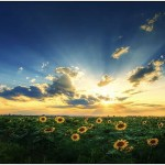 Happiness-by-Zsolt-Zsigmond-3