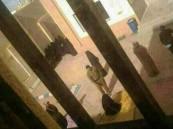 """صورة لجلد فتاة في رفحاء اعتدت على """"ضرّتها""""تثير الجدل فى تويتر"""