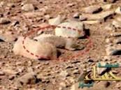 صورة لحيوان قارض على سطح المريخ تثير الجدل