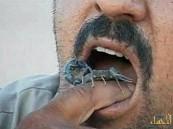 بالفيديو.. مزارع عراقي يدمن أكل «العقارب السامة»
