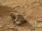 """بالفيديو.. """"ناسا"""" ترصد حيواناً زاحفاً في المريخ"""