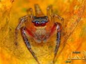 بالصور.. العناكب كما لم ترها من قبل