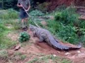 """""""بالفيديو"""" رجل ينجو من هجوم تمساح ضخم بأعجوبه"""