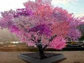 بالصور … شجرة سحرية تنتج 40 نوعًا من الفاكهة