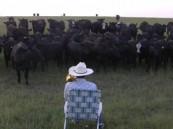 بالفيديو … مزارع يجمع قطيع الأبقار بعزف البوق