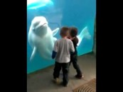 بالفيديو … دلفين يرعب الأطفال
