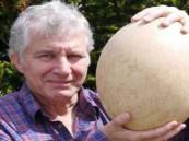 بيع أكبر بيضة في العالم لـ«الفيل المنقرض»