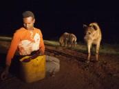 بالصور … أثيوبي يطعم الضباع بفمه