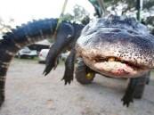 فتاة أمريكية تصطاد أكبر تمساح في العالم