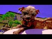 """بالفيديو.. """"الكلب العنكبوت"""".. """"مقلب"""" يحقق 3 ملايين مشاهدة في يوم واحد"""