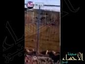 بالفيديو .. يمني يصطاد حيواناً غريباً افترس أغنامه