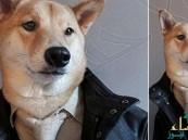 كلب يعرض أزياء لأشهر ماركات الملابس الرجالية