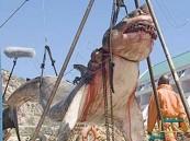 العثور على سمكة قرش انقرضت من 20 مليون سنة بباكستان