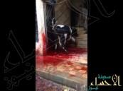 بالفيديو … عجل يهرب مذبوحاً بسبب جزار مستهتر