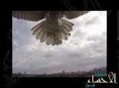 بالفيديو … صقر ينقض على طائرة بدون طيار