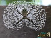 بالصور … تصاميم مذهلة لشبكات العنكبوت تحير العلماء