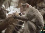"""الهند: قرد يقرأ جريدة ويتابع """"أهم"""" الأخبار"""
