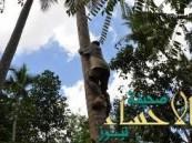 سبعيني يهرب من زوجته بتسلق شجرة