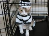 القبض على قطة تهرب المخدرات