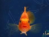 """عملية جراحية معقدّة لإنقاذ سمكة كانت تعاني """"الإمساك"""""""