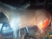 بالصورة… مواطن يسكب الوقود على حصان ويشعل النيران فيه